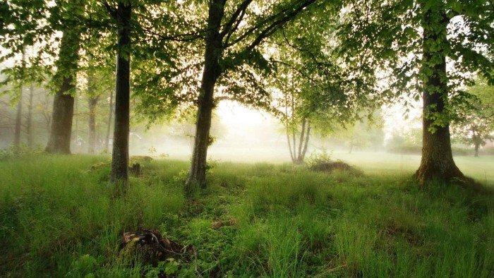 Зеленая лужайка в лесу