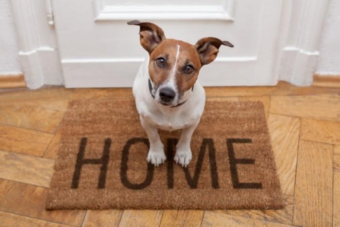 Собака сидит на коврике перед дверью