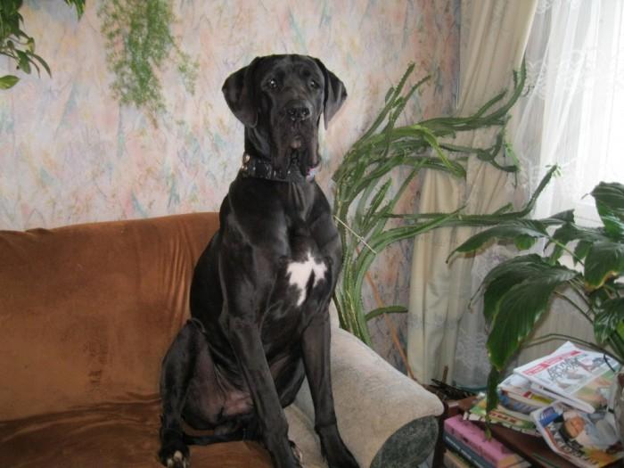 Собака в стойке сидит на диване