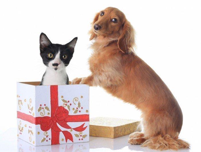 Собака и кошка в коробке