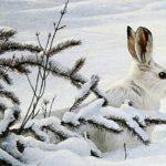 Белый зайка