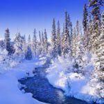 Боярыня-зима