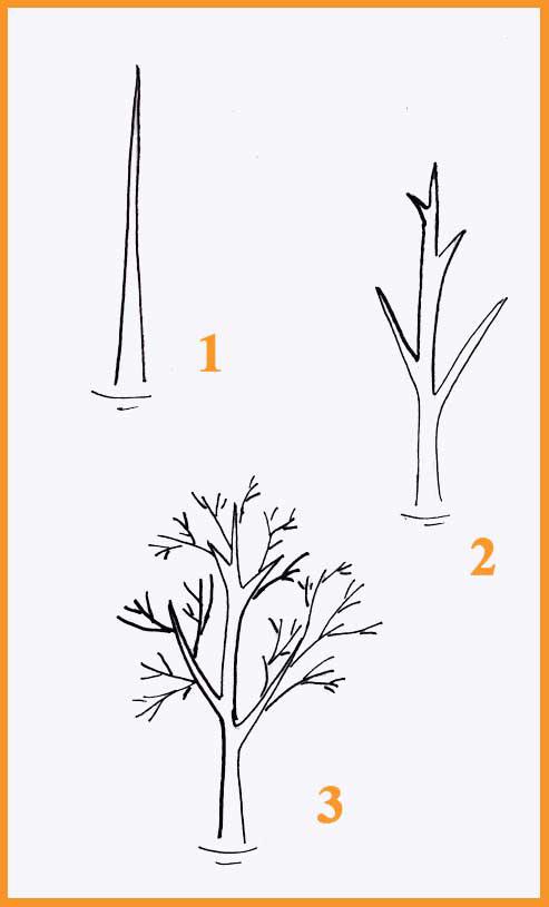 Поэтапное рисовать деревья