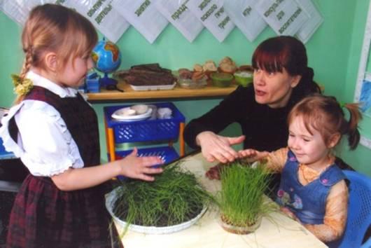 Дети с воспитательницей рассматривают траву в горшочке