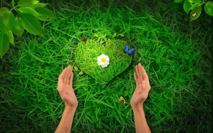 Сердечко из травы в руках