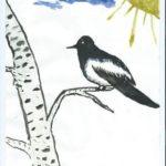 Сорока-беловока