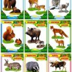 Дикие животные и их детёныши