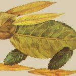 Заяц из листьев