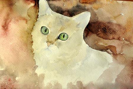 Кошка на красно-коричневом фоне