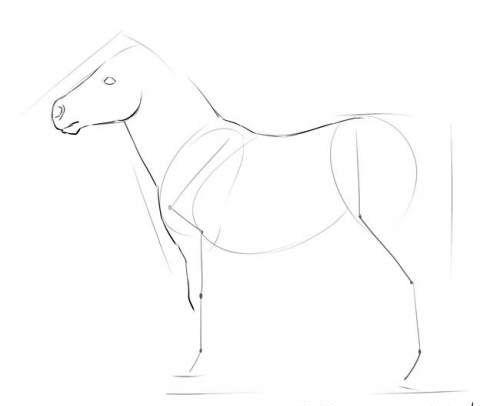 Пони в полный рост, фото четыре
