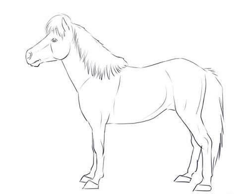 Пони в полный рост, фото семь