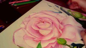 Большая розовая роза, на столе выше листа с рисунком карандаши и телефон