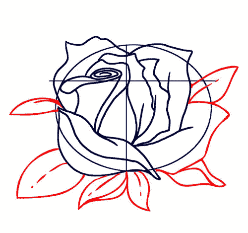 Распустившийся цветок розы, фото 4