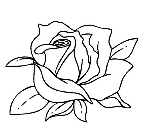 Распустившийся цветок розы, фото 5