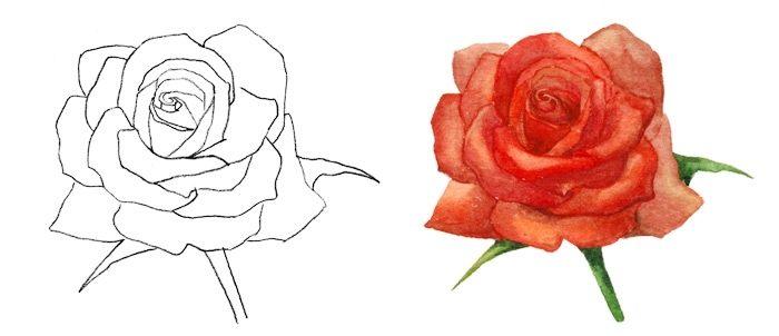 Рисунок розы для детей, фото 4
