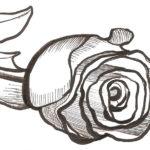 Рисунок розы ручкой, фото 5