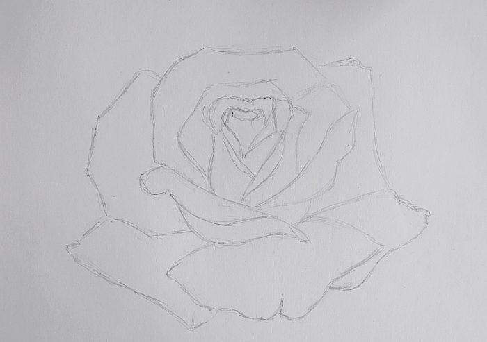 Роза гуашью, фото 1