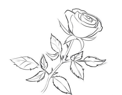 Розе на стебле, фото 5