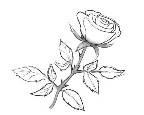 Розе на стебле, фото 7