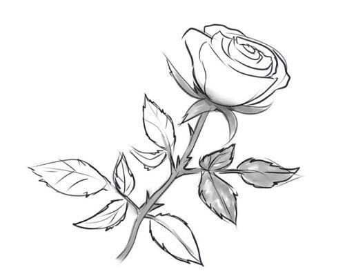 Розе на стебле, фото 8