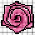 Розовая роза с чёрной окантовкой лепестков