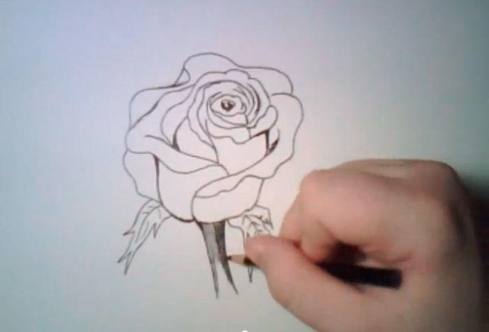 Рука дорисовывает стебель розы