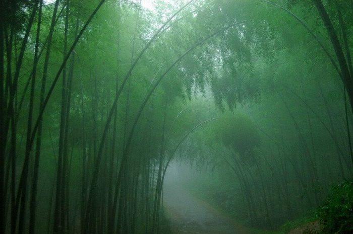 Мистическая лощина чёрного бамбука