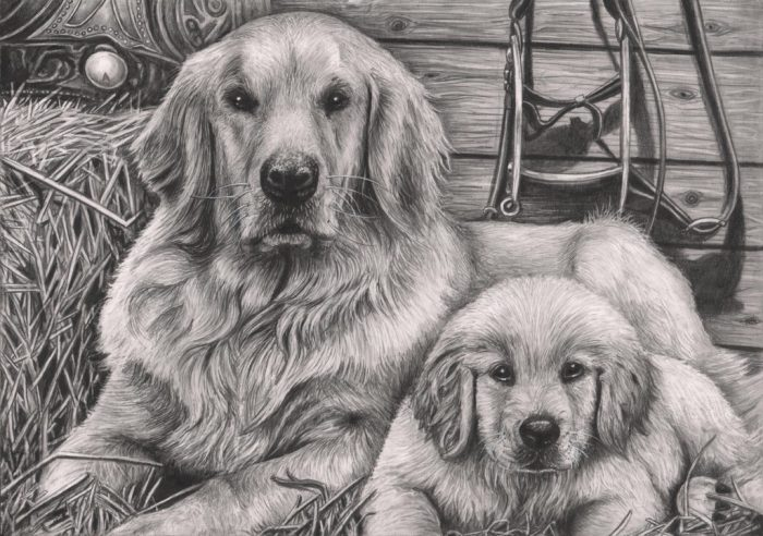 Собака с щенком, нарисованные карандашом