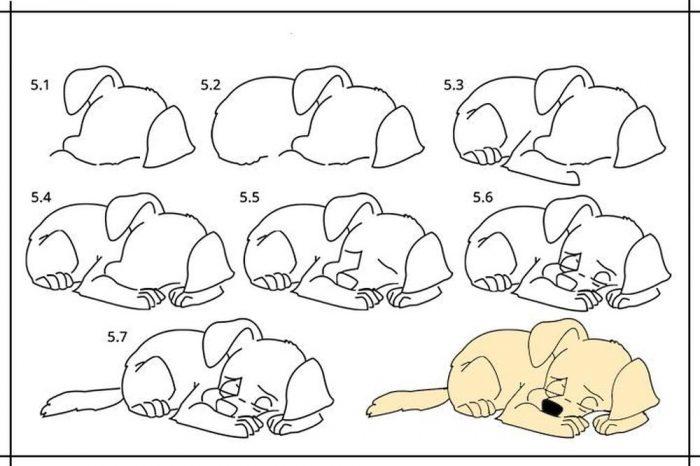 Схема рисования спящей собаки