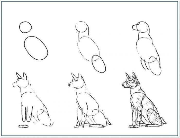Схема рисования овчарки