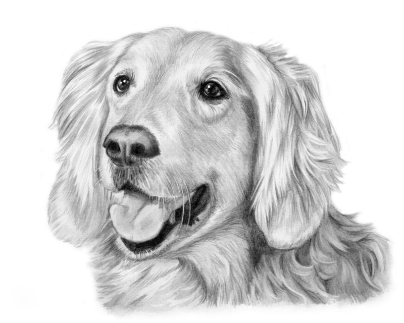 Как нарисовать собаку: мастер-классы